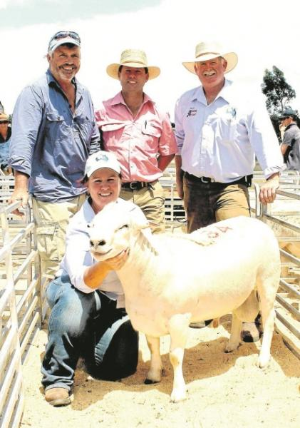 Australian White ram purchased  for $5000 in 2014