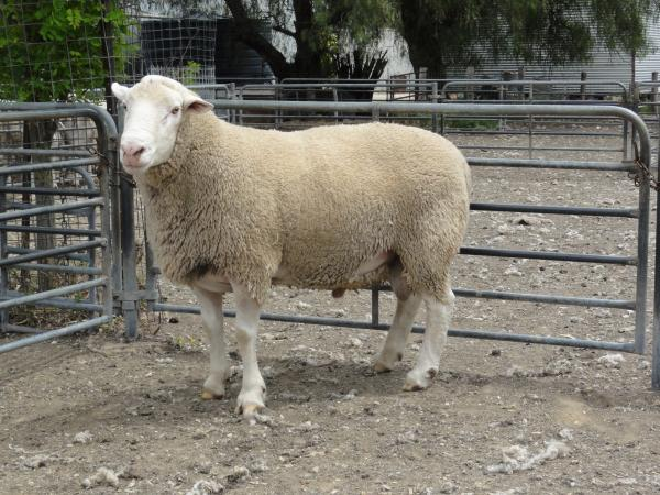 Wooled Composite Ram